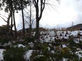 雪の降る地域